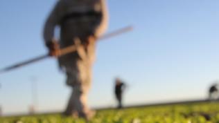 Tarımsal Borçlu Cari Hesap Kredisi Nasıl Alınır ve Kimlere Verilir?